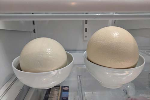 The two ostrich eggs in my refrigerator